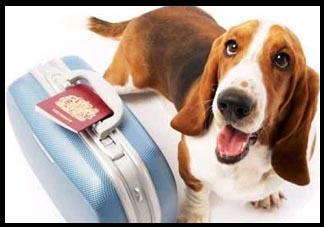 Maioria das pessoas que vivem com cachorros deixam de viajar por causa deles