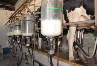 Paraná é o segundo maior produtor de leite do País
