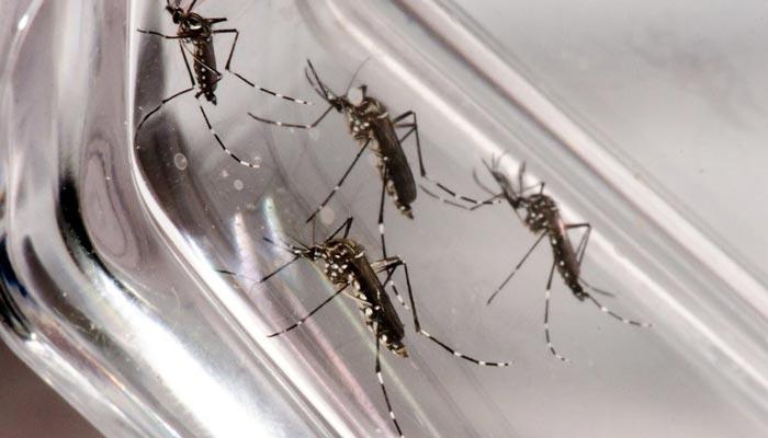 Dengue faz mais 12 vítimas fatais na última semana