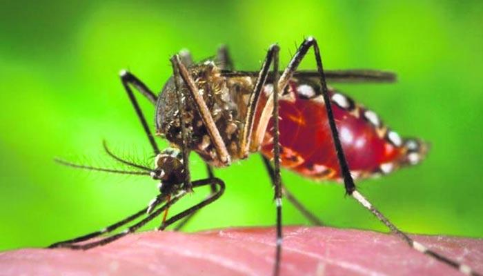 Em uma semana são confirmados mais 10 mil casos de dengue no Paraná