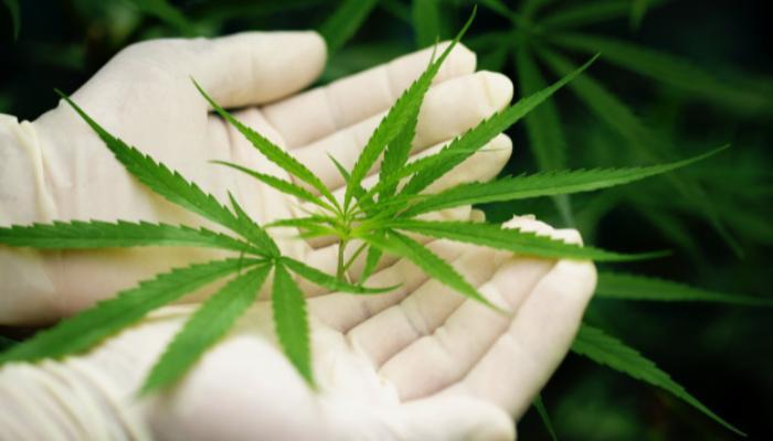 Tecpar busca parceiros para produzir e vender medicamentos à base de Cannabis