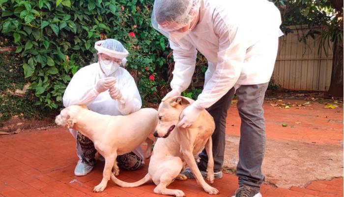 UEL estuda efeitos da Covid-19 em cães, gatos e animais silvestres