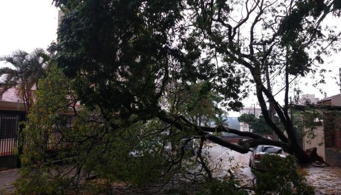 Tempestade registrada na tarde deste domingo (27) derruba árvores em Maringá