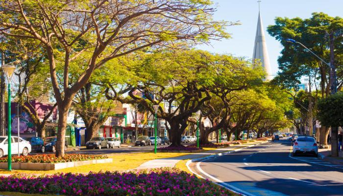 Após 70 anos, Maringá desenvolve novo plano de arborização