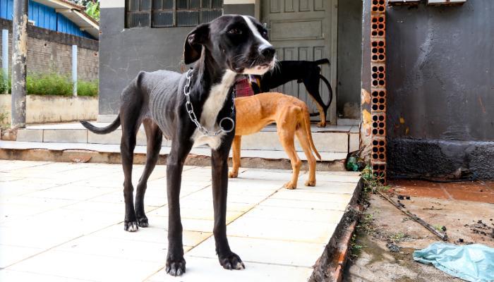 Bem-estar Animal resgata três cachorros vítimas de maus-tratos, responsável foi multado em R$ 6 mil