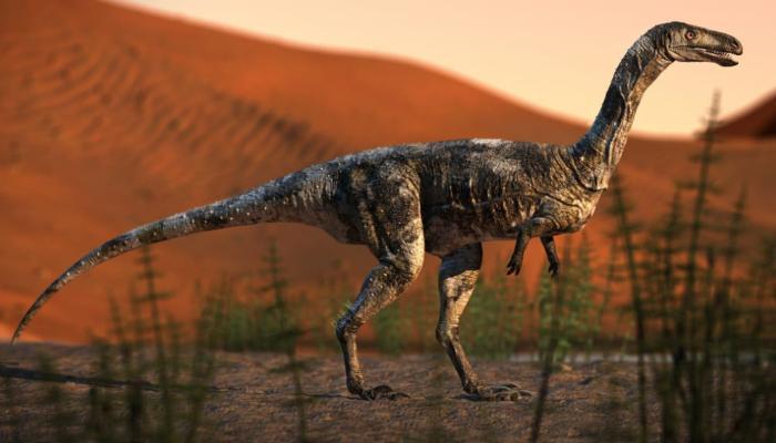 Um ano após descoberta de dinossauro paranaense, pesquisas continuam