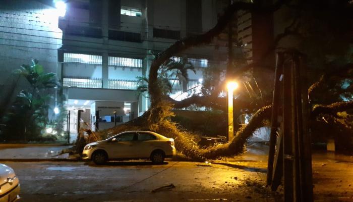 Temporal desta quarta-feira (7) derruba 16 árvores em Maringá
