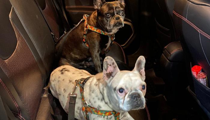 Detran orienta sobre forma correta de transportar animais