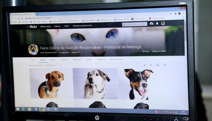 Diretoria de Bem-Estar Animal cria plataforma para adoção online de animais